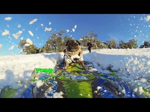 Camping London Ontario >> Yannick.net   Un petit chien fait de la planche à neige ...